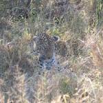 OkavangoDelta-1110533