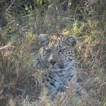 OkavangoDelta-1110536