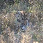 OkavangoDelta-1110539