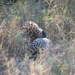 OkavangoDelta-1110542