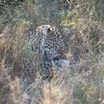 OkavangoDelta-1110543