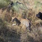 OkavangoDelta-1110547