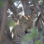OkavangoDelta-1110549