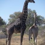 OkavangoDelta-1110554