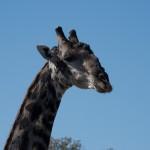 OkavangoDelta-1110555