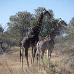 OkavangoDelta-1110557