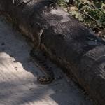 OkavangoDelta-1110570