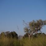 OkavangoDelta-1110590