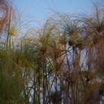 OkavangoDelta-1110603