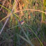 OkavangoDelta-1110612