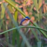 OkavangoDelta-1110616