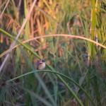 OkavangoDelta-1110622