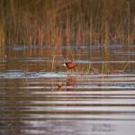 OkavangoDelta-1110634