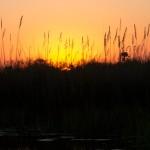 OkavangoDelta-1110640