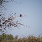OkavangoDelta-1110646