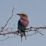 OkavangoDelta-1110647