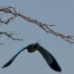 OkavangoDelta-1110654