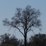 OkavangoDelta-1110663