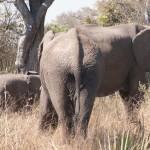 OkavangoDelta-6162242