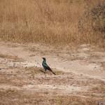 OkavangoDelta-6162254