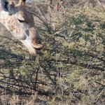 OkavangoDelta-6172332