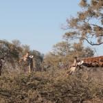 OkavangoDelta-6172336