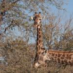 OkavangoDelta-6172343