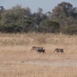 OkavangoDelta-6172362