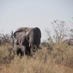 OkavangoDelta-6172393