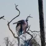 OkavangoDelta-6172434