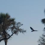 OkavangoDelta-6172435