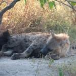 OkavangoDelta-6172479