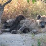 OkavangoDelta-6172481