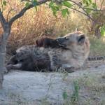 OkavangoDelta-6172482