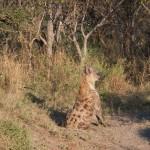 OkavangoDelta-6172487