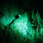 OkavangoDelta-6172522