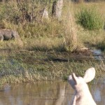 Where is Piggy in Botswana?