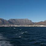 RobbenIsland-1100048