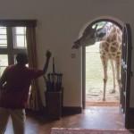 GiraffeManor-1990