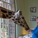 GiraffeManor_Kenya-1130616