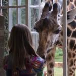GiraffeManor_Kenya-1130625