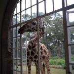 GiraffeManor_Kenya-1130626