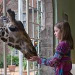 GiraffeManor_Kenya-1130644