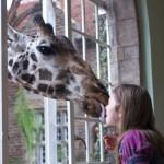 GiraffeManor_Kenya-1130646