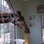 GiraffeManor_Kenya-1130654
