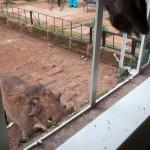 GiraffeManor_Kenya-1130661