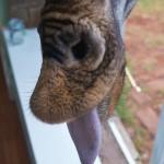 GiraffeManor_Kenya-1130678