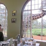 GiraffeManor_Kenya-1968