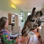 GiraffeManor_Kenya-1978