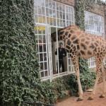 GiraffeManor_Kenya-1981